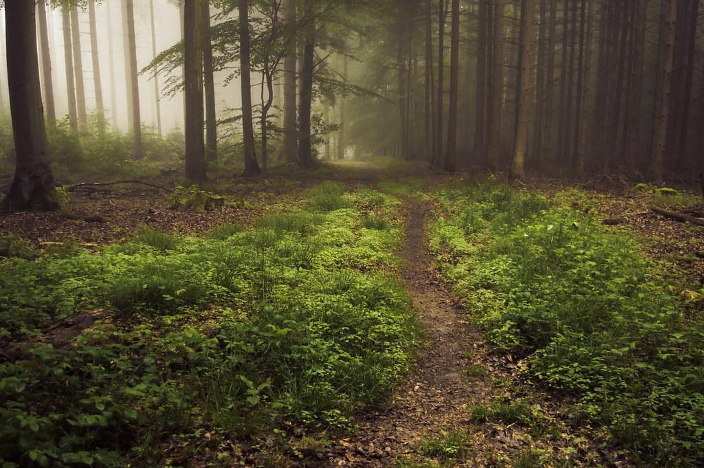 9cee29b3a Forest Floor in Fog | A misty day in the Eifel | Jerdess | Flickr