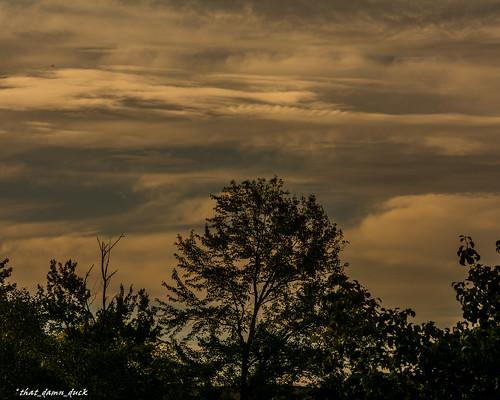 outdoor nature clouds trees sundown sunset