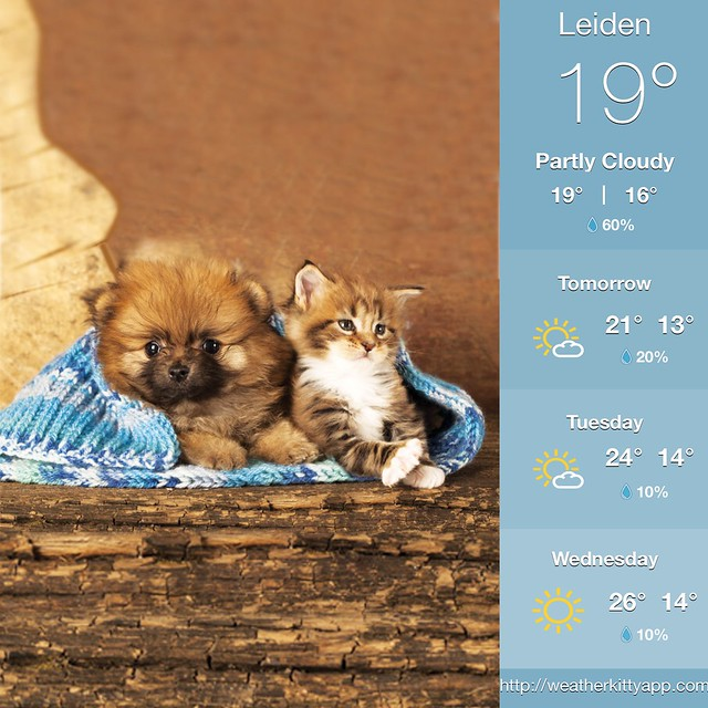 Download it now and thank me later - http://weatherkittyapp.com