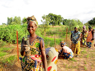 Senegal - Mbentinkys Women's Group Field Outplanting - July 2012 | by treesftf