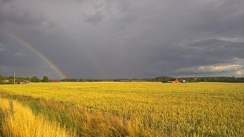 gold guld rainbow regnbåge harvest skörd light ljus solljus sunlight field fält farming jordbruk foftune rikedom lumia950 pureview carlzeiss wonderworld
