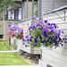 Wed, 08/29/2012 - 13:54 - _DSC2800