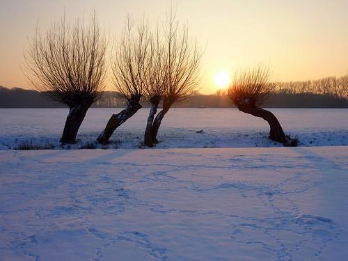 winter netherlands nederland uithof p1510489