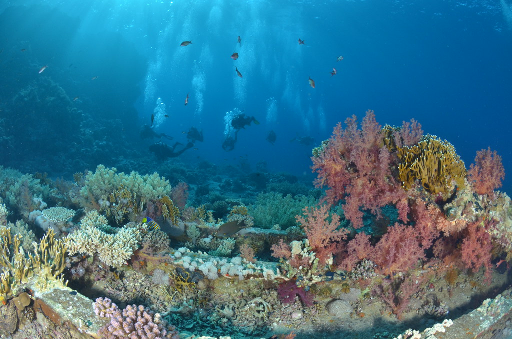 Coloured coral on Ras Mohammed