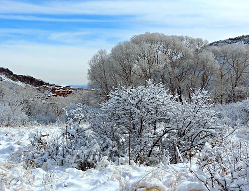 trees colorado snowy snö sneeuw snø paysage foothills jeffersoncounty january landscape invierno hiver winter inverno snow saljunya sandraleidholdt
