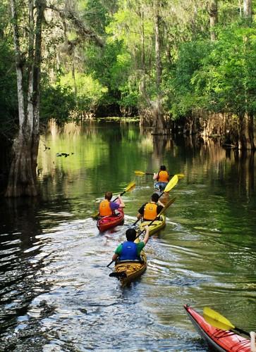 nature tampa photo kayak florida explore rivers recreation paddling hillsborough lettucelake