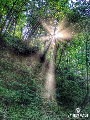 sunburst sunrise lensflare woods trees green nature ridgefield