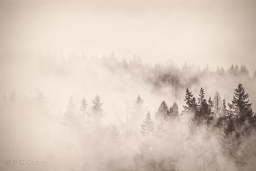 winter mist mountain tree nature fog clouds forest sunrise canon garden season landscape woods evergreen valley cascade cloudscape raincloud cascademountains duglasfir pcchang rememberthatmomentlevel1 rememberthatmomentlevel2 dougfirforest
