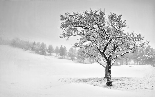 uk trees winter light sky blackandwhite white snow abstract black colour tree art ice nature beautiful beauty field weather canon landscape europe dof empty hill single stunning fields isolated winterscene 500d beautifullandscape brierfield treecoveredwithice blinkagain