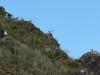 Racci arménští (Larus armenicus) na skalách u jezera, foto: Petr Nejedlý