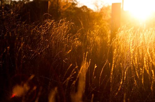 morning light plants contrast sunrise dawn golden early spring nikon warm lensflare manual goldenhour 50mmf18 nikon50mmf18 manuallens nikond90 thetouchesofdawn