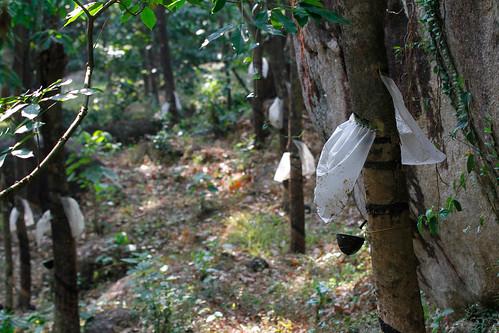 travel india holiday tourism landscape culture kerala rubber indien kautschuk