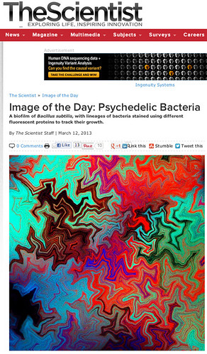 Our image in TheScientist mag. | by Fernan Federici