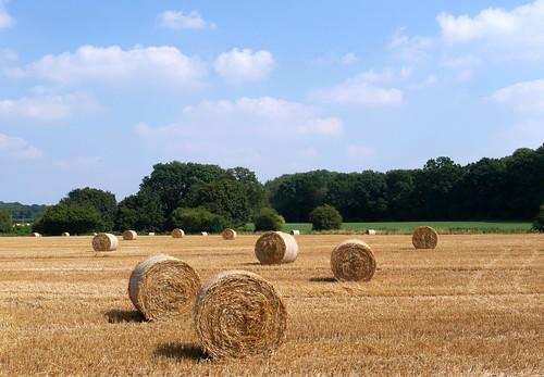 landscape hay fields sky clouds