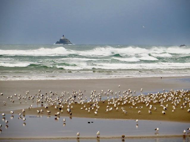 Tillamook Rock Lighthouse and Birds