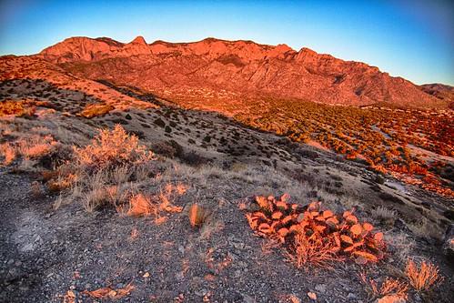 tokina albuquerque abq sandiamountians sandias sandia hdr cactus sunset noclouds flickrfriday whennightfalls