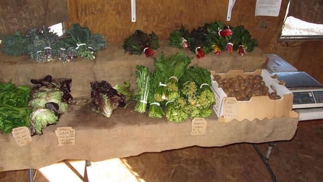 IMG_7124 Goleta Ellwood organic farm stand Langlo Ranch road lettuce dandilion