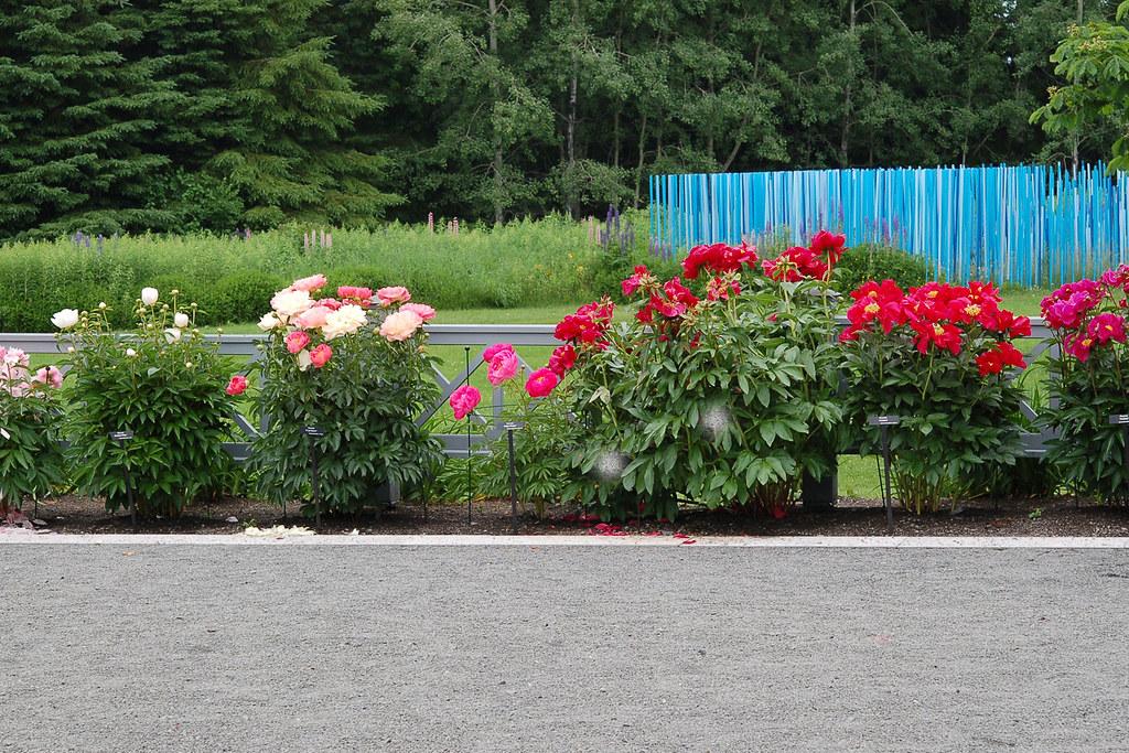 Plate-bande de pivoine | Photo prise aux Jardins de Métis | Flickr