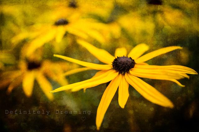 Summer Flowers & Texture