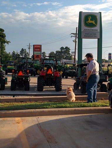 texas tractors cody dog