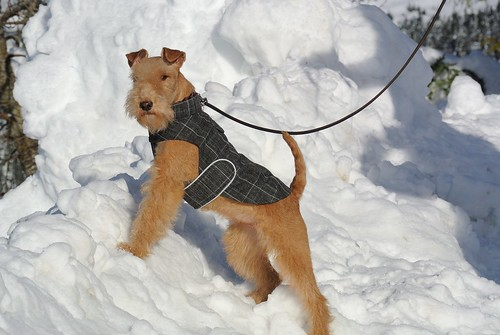 Snow dog | by lakielove
