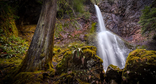 winter lakecrescent tree nature wet forest canon landscape waterfall washington nationalpark moss woods rocks northwest olympicpeninsula portangeles cedar pacificnorthwest olympic olympicnationalpark 2012 marymerefalls photographry