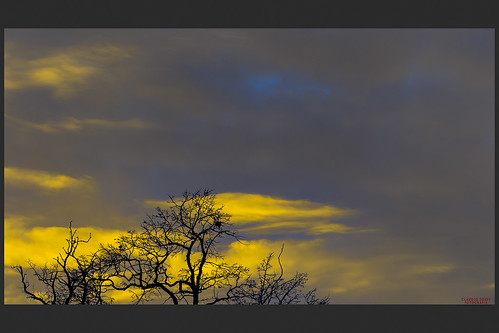 sky tramonto nuvole cielo albero inverno colori rami nubi