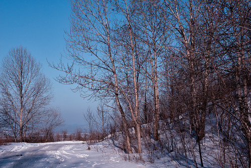 blue trees winter sunset wallpaper sky sun snow cold ice nature beautiful evening view russia hill harmony rest visage artem primorye