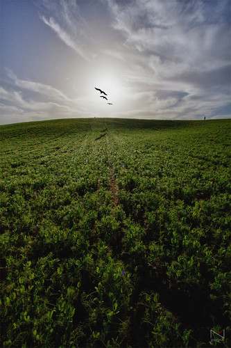sky green grass birds hill negev drama נגבclouds