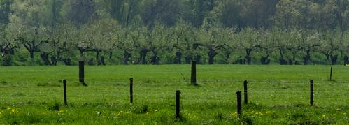 cultural and natural poles | by beta karel