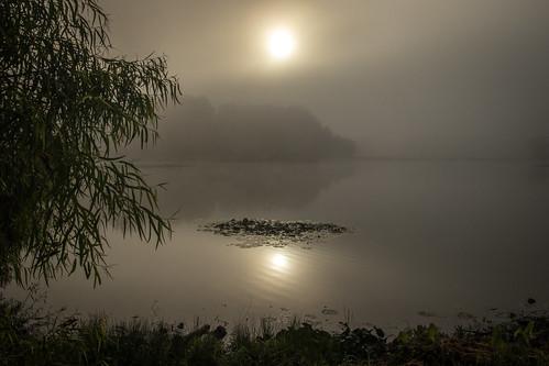 sunrise fog mo missouri willow lotus pond lake reflection