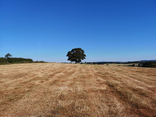 Tree and parched field | by theoldsmithy