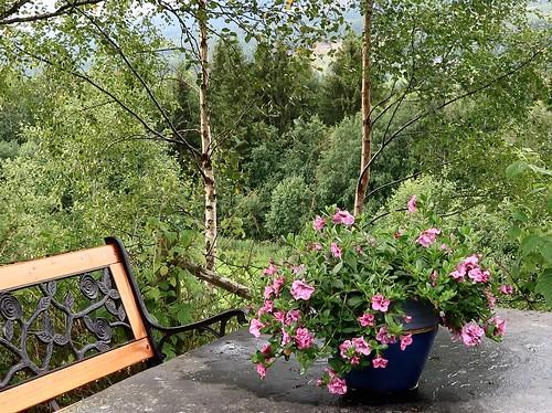 Fra hagen vår. | by ks mikkelsen