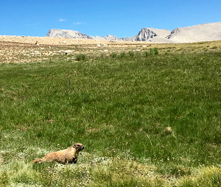 Marmot   by wavesounds