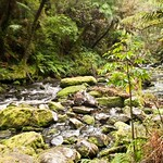 Nueva Zelanda, Isla Sur 36