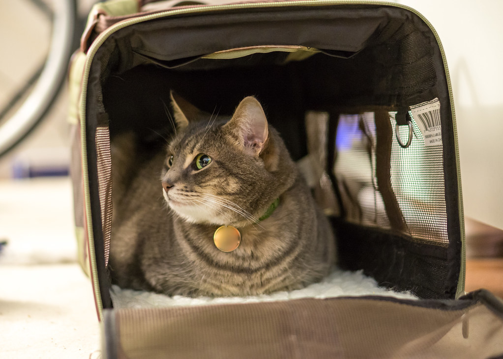 Lounging in the cat carrier