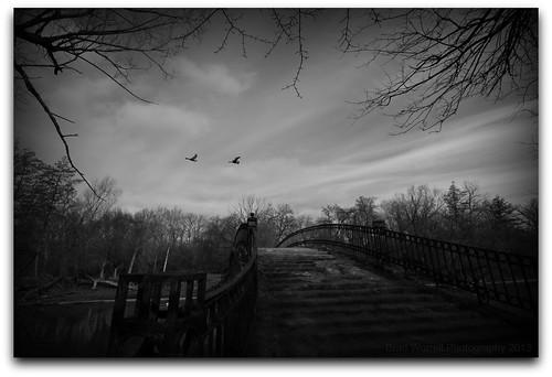 bridge sky geese crossing elizabethpark