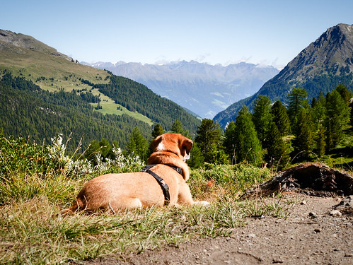 Romantic dog | by (Argia Sbolenfi)