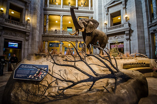 Museum of Natural History, DC | by m01229