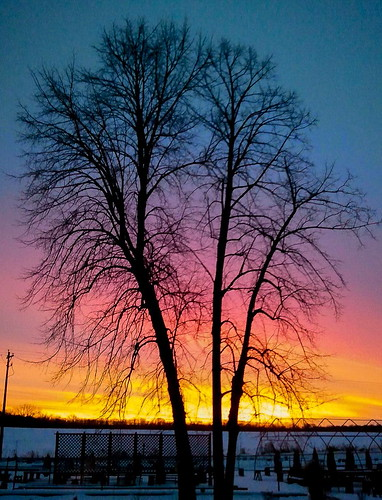 morning pink blue red sky orange snow cold color tree nature silhouette yellow sunrise amber early branches vivid mauve twigs