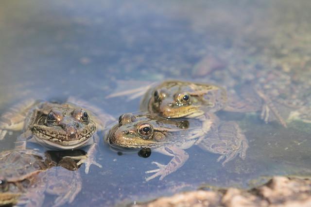 froggin along or leap frog?