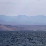 12120288 - Desert Coast