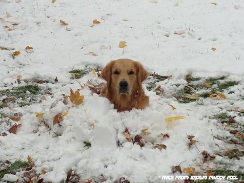 2012_10_27 - další první sníh