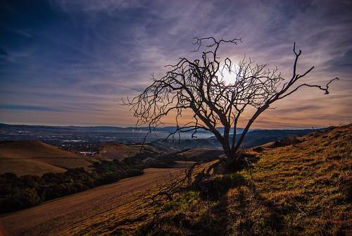 california dublin tree sunrise cloudy dublinhills ebparksok pwwinter