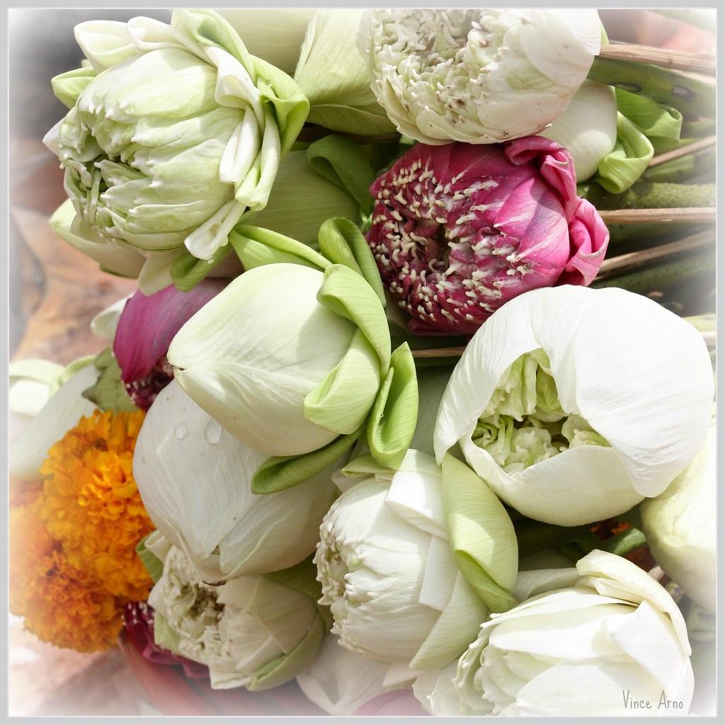 Fleurs De Lotus Thaïlande La Fleur De Lotus Est Un Des S