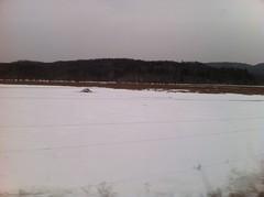 土, 2013-02-02 15:20 - 氷原に飛び出たビーバーの巣
