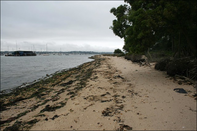 The west coast of Brownsea Island
