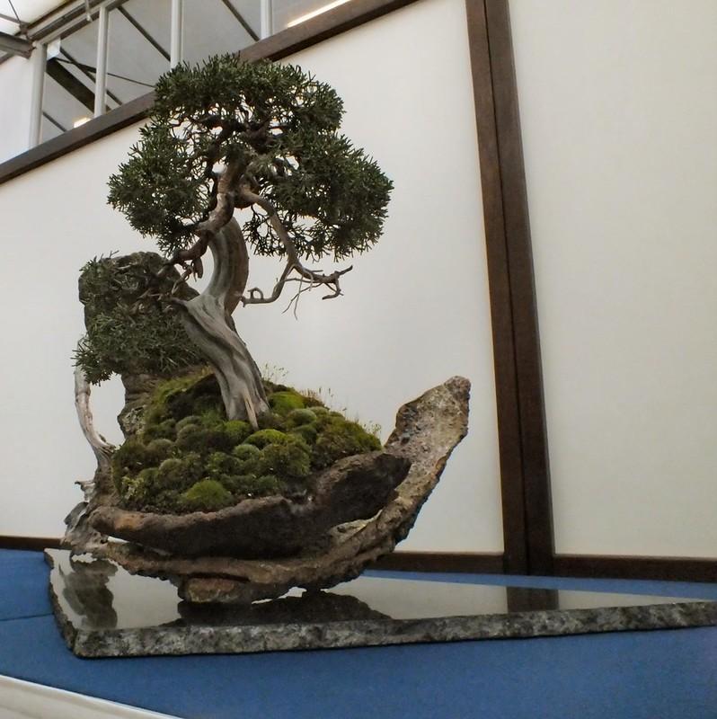 bonsai expositie