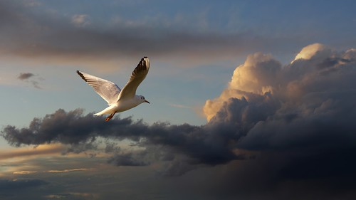 light sunset sky bird love nature animal clouds fly cool wings peace glory seagull gull serbia joy flight feathers free tranquility serenity getty romantic belgrade bliss beograd srbija kalemegdan ptica galeb