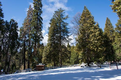 california nationalpark nikon unitedstates nps yosemite yosemitenationalpark sleigh 28300mm fishcamp johnk d600 yosemitepark tenayalodge horsedrawnsleigh nikond600 horsedrawnsleighride johnkrzesinski randomok begliumdrafthorses